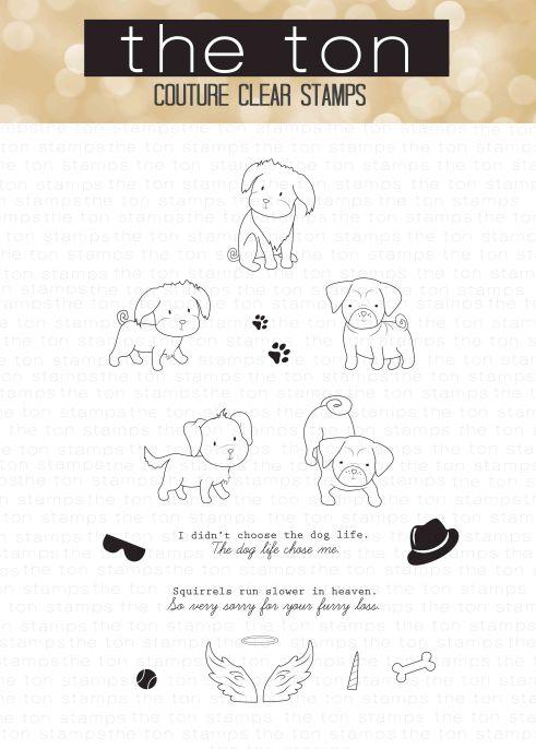 dog-life-water