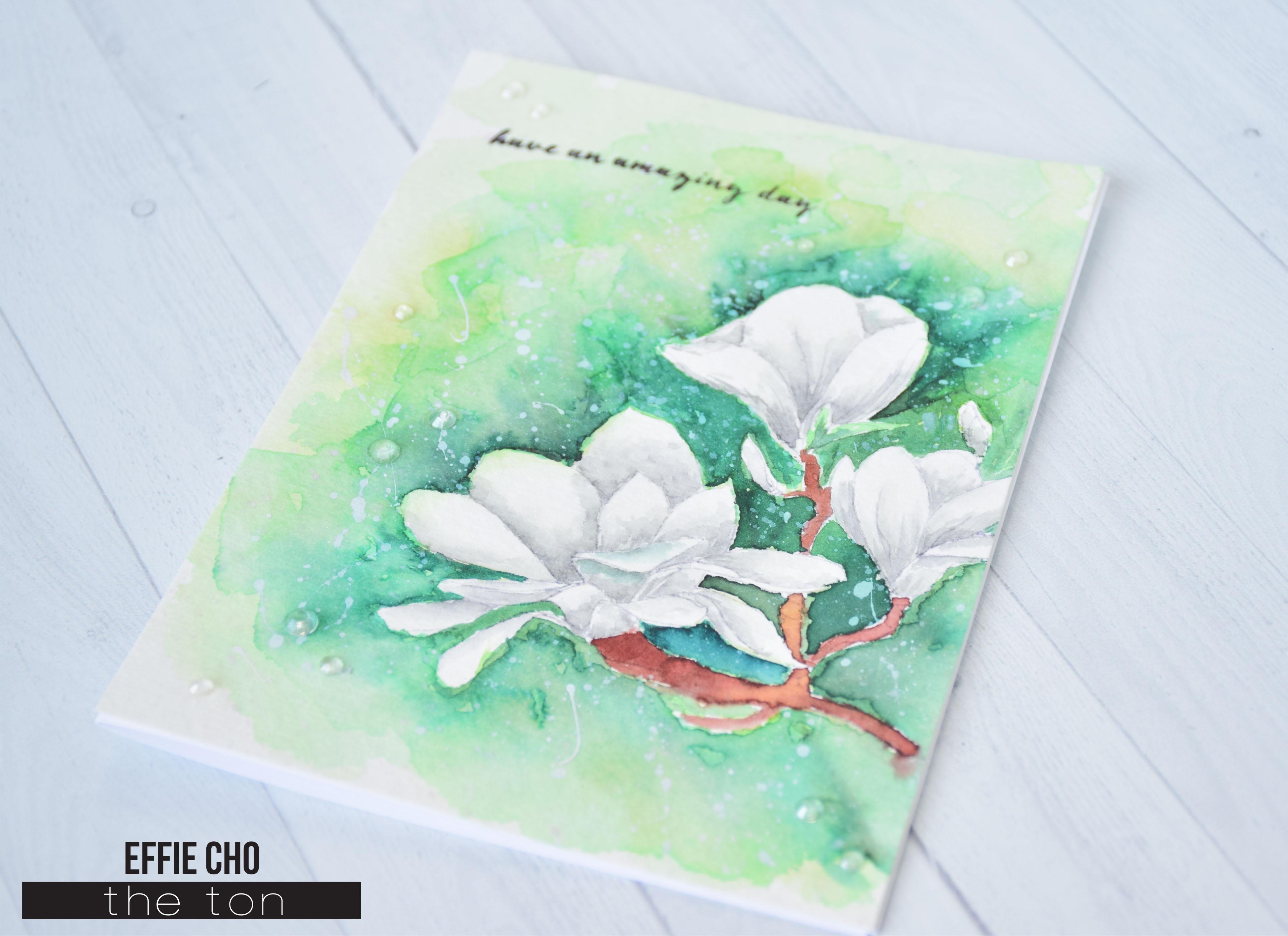 no line magnolias2