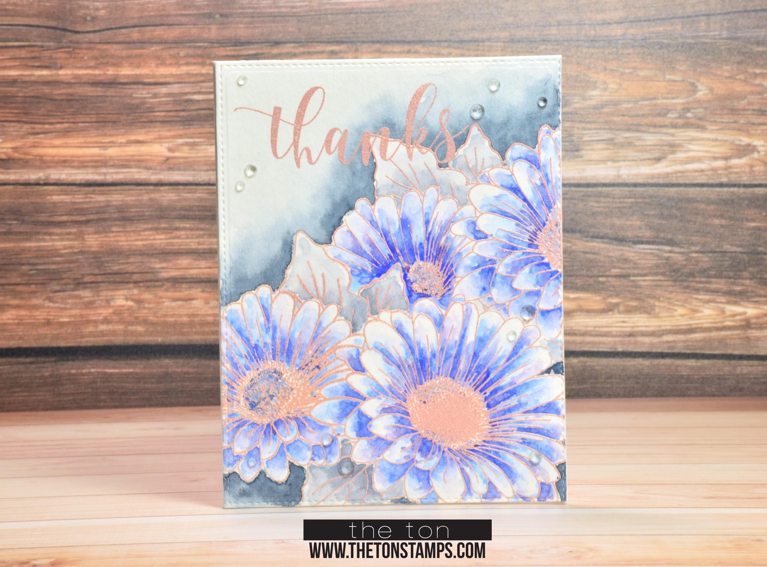 blue daisy duet