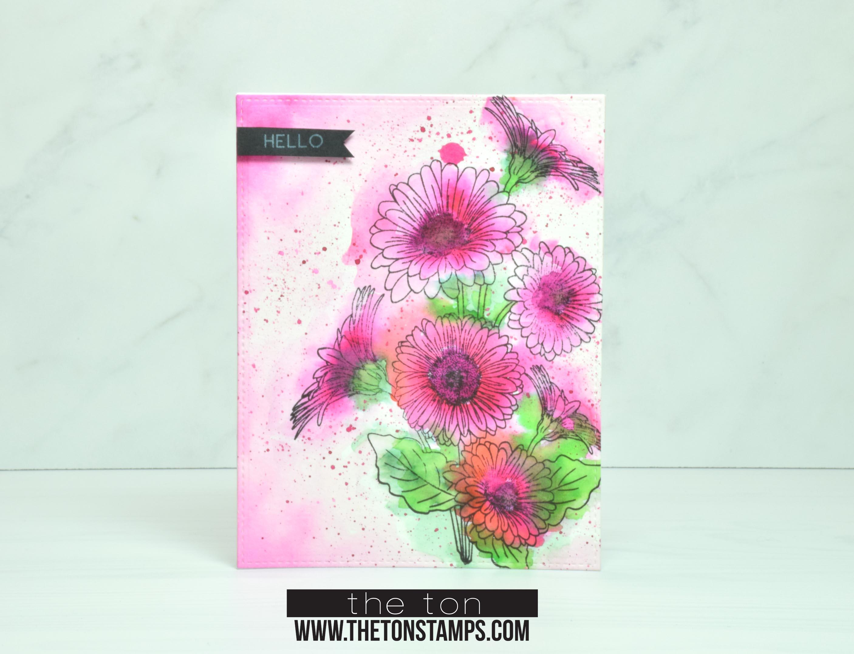 loose pink daisies