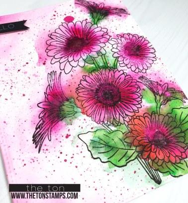 loose pink daisies2