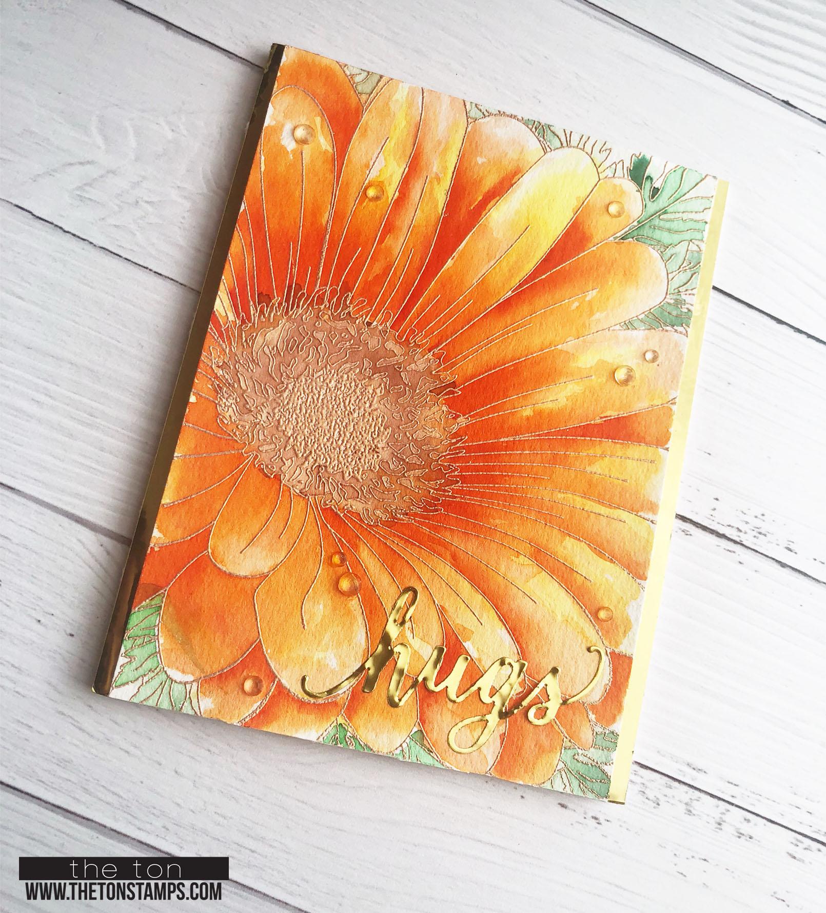 orange 34 daisy2