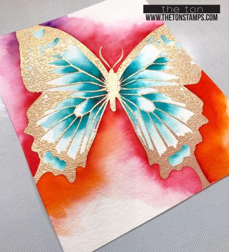 swallowtail cb2