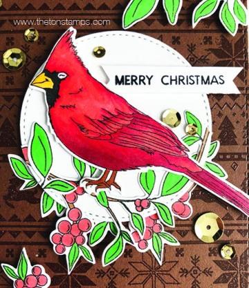 brown cardinal3